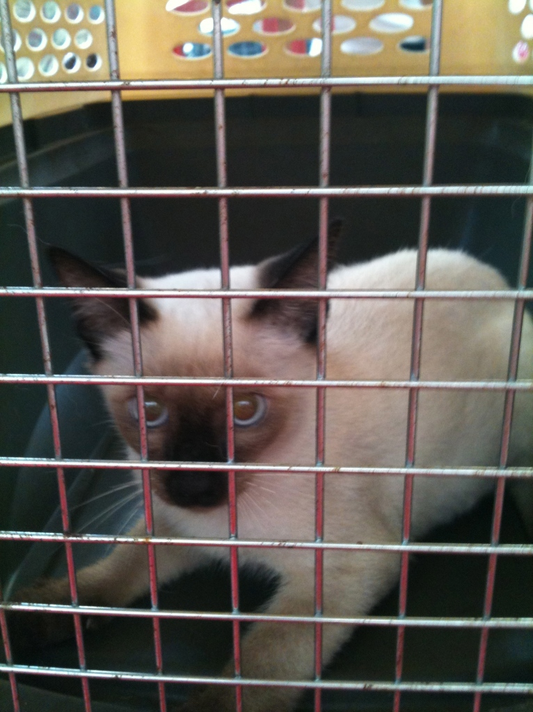 this is when Arlene and I capture the kitty to transfer him to Sarah's house.